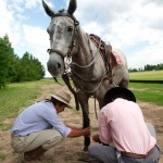 Tacking up a polo pony - Argentina
