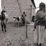 Permanent Resettlement Housing, Tebeldia Camp, Eritrea