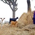 Jennifer with her goats, Tanzania