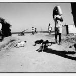 Lamu Cats