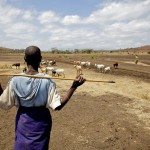 Maasai Goatherd, Tanzania