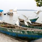 Fishing Boats, Kome Island, Tanzania