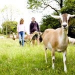 Hill Farm Dairy owners, Will & Caroline Atkinson, with their herd of dairy goats.