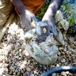 Crushing the rock ore by hand 2, Migori Gold Mine, Kenya
